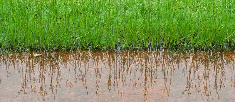 Flooded grass