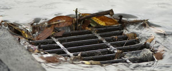 Leaves blocking drainage grate